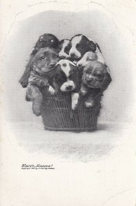 1901-1907; Basket Full Of Puppies, Where's Mamma?