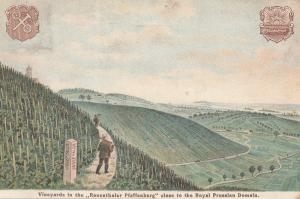 Rauentheler Plaffenberg Prussian German Wine Vineyards Advertising WW1 Postcard