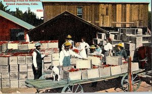 Hauling Fruit To Market Grand Junction Colo. Vintage Postcard Standard View Card