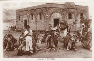 RP: Camel Caravan at rest , ADEN , Yemen , 1920-30s