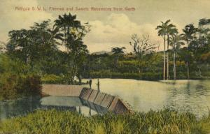 antigua, B.W.I., Fiennes and Sweets Reservoirs from North (1910s) Postcard
