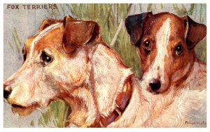 Dog ,  Fox Terriers