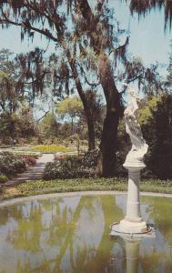 Spring Star,  A feature of the Orton Plantation near Wilmington,  North Car...