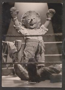 Hedge Hog In Boxing Ring Real Photo - Used 1965
