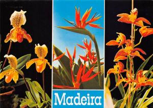 Portugal madeira Orquidea Cymbidium Louwamo Flowers