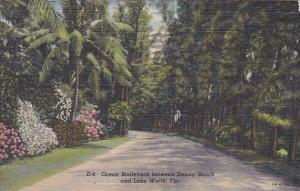 Florida Lake Worth Ocean Boulevard Between Delray Beach And Lake Worth 1947