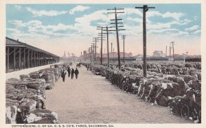 SAVANNAH, Georgia, 1910-1930s; Cotton Scene, C. Of GA. O.S.S. CO's. Yards