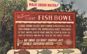 Curt Teich Homosassa Springs FL Fish Bowl Sign Linen Postcard