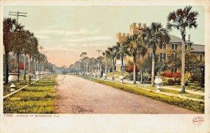 SEABREEZE DAYTONA BEACH FLORIDA~PALM TREE LINED AVENUE~1910 PHOSTINT POSTCARD