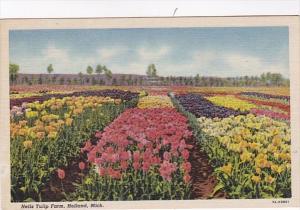 Michigan Holland Nelis Tulip Farm Curteich