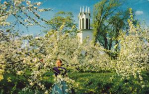 Canada Apple Blossoms Vova Scotia