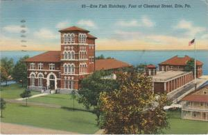 Erie PA Pennsylvania Fish Hatchery at Foot of Chestnut Street - pm 1944 - Linen