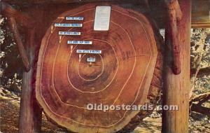 Logs, Logging, Timber, Old Vintage Antique Postcard Post Card, Postales, Post...