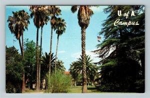 Tucson AZ- Arizona, University of Arizona Campus, Chrome Postcard