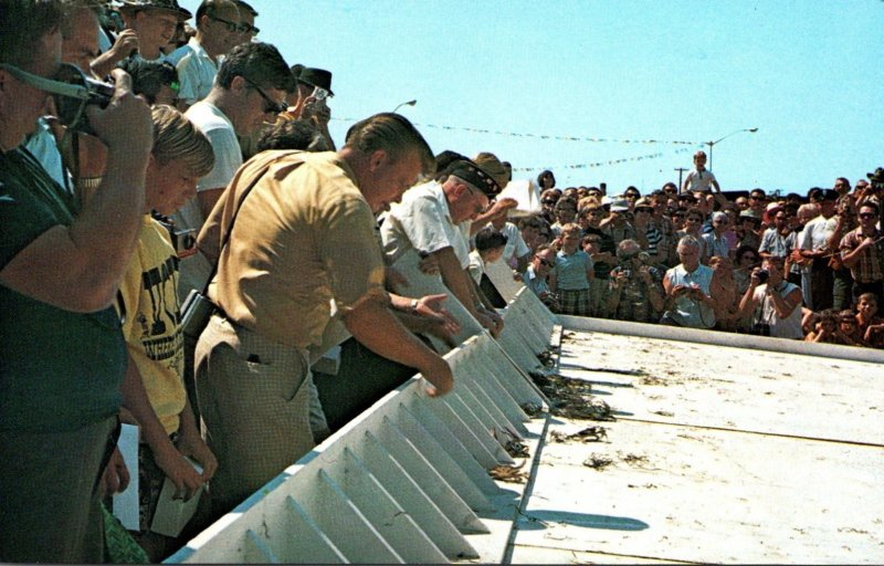 Maryland Crisfield Crab Derby Race