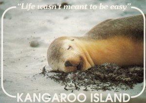 Kangaroo Island , South Australia , 50-70s ; Sea Lion at Seal Bay
