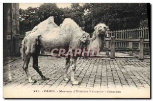 Old Postcard Paris Museum of Natural & # 39Histoire Camel