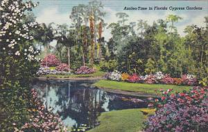 Florida Azalea Time In Cypress Gardens Curteich