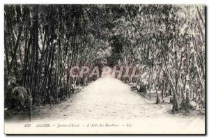 Algeria Algiers Old Postcard garden & # 39essai L & # 39allee of bmabous