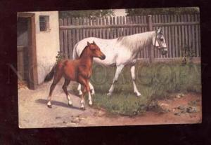 013250 White HORSE & FOAL near Stable Vintage Color PC