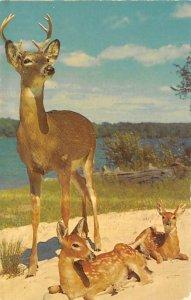 Majestic Buck Deer Unused