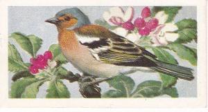 Trade Cards Brooke Bond Wild Birds in Britain No8 Chaffinch
