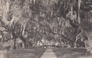 BROOKGREEN GARDENS, South Carolina, 00-10's; Live Oak Walk From Garden Entrance