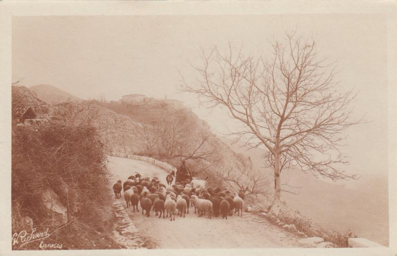RP: CANNES , France, 1910 ; Sheepherder & flock on road