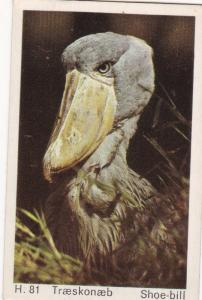 Trade Card Dandy Gum Wild Animals H 81 Whale Headed Stork or Shoe Bill