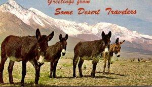 California Greetings From Some Desert Travelers Donkeys