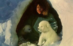 AK - Barter Island. Eskimo Boy and Pet Polar Bear Cubs