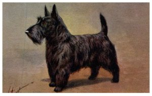 Dog ,  Scotch Terrier