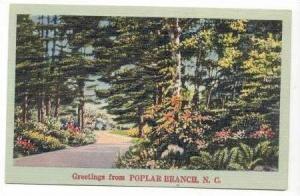 Greetings from Poplar Branch, North Carolina, 30-40s