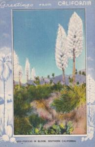 Greetings From California Yuccas In Bloom Blue Border