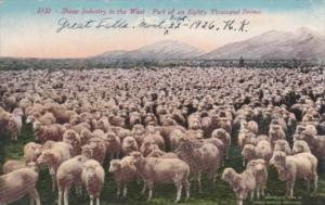Montana Great Falls Sheep Industry In The West