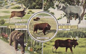 Wild Game Of The West Bear White Tail Deer Big Horn Sheep Buffalo and Moose