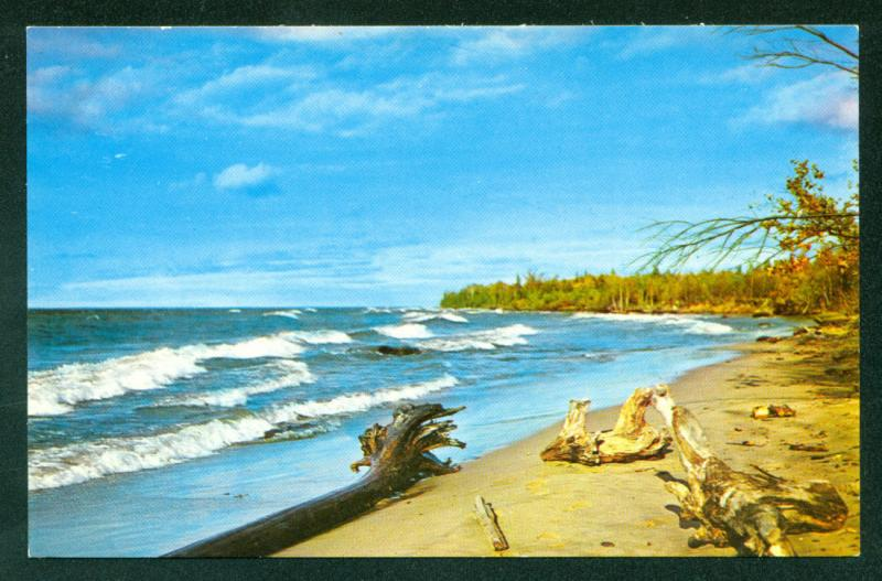 MAINE SCENE Driftwood Ocean View Beach Scene Waves Postcard