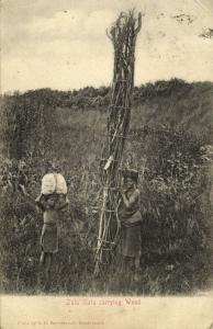 south africa, ZULULAND, Native Zulu Girls carrying Wood (1904) Postcard, Stamp