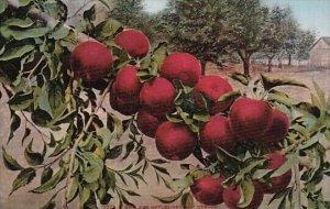 Oregon Howard Apples Grown In Portland