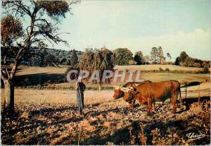 Postcard Modern Haute Vienne Limousin Picturesque hitch B�ufs