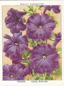 Wills Vintage Cigarette Card Garden Flowers 1939 2nd Series No 27 Petunia Blu...