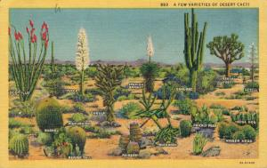 USA A few Varieties of desert Cacti 01.62