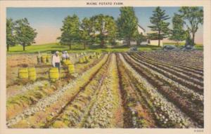 Maine Typical Maine Potato Farm