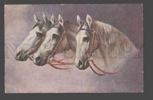 095001 Heads of three White HORSE in Bridle Vintage Color PC
