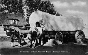 Cow Post Card Golden Gate or Bust, Covered Wagon Kearney, Nebraska, USA Unused