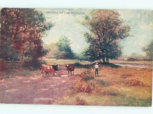 Divided-Back ANIMAL SCENE Great Postcard AA9524