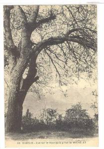 Vue Sur Le Djurdjura Prise De Michelet, Kabylie, Algeria, Africa, 1900-1910s