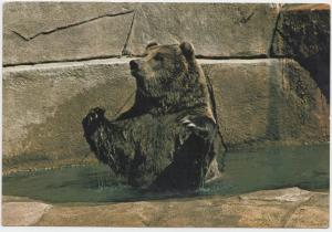 GRIZZLY BEAR, MILWAUKEE COUNTY ZOO, unused Postcard
