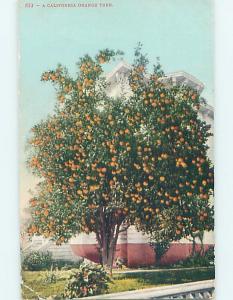 Divided-Back ORANGE TREE Postmarked San Francisco California CA HM6536