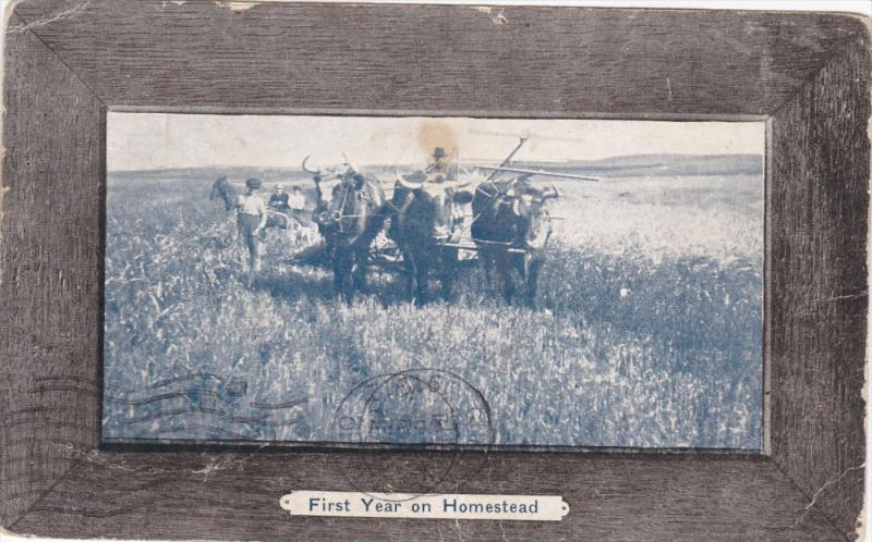 First Year On Homestead, Farmers, Oxen Plough, PU-1912